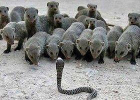 动物之间的决战,你意想不到的场景!
