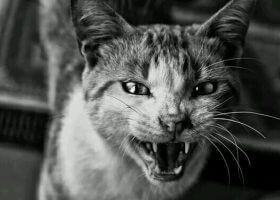 猫无法被驯化之谜(天生的杀手)